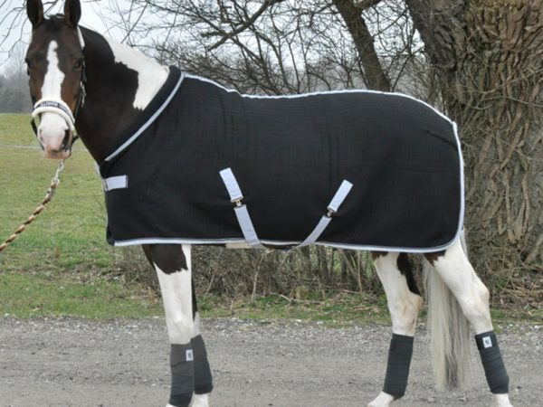 9986-Xth-Stable-rug-basic-on-horse