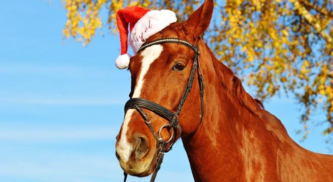 horse-1036123_1920