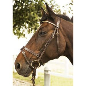 Mountain Horse Calypso Trense