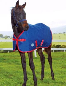 WeatherBeeta Original 1200D Foal Standard Neck Medium WeatherBeeta Foal Rug WeatherBeeta Medium Weight Foal Rug Standard Neck Foal Rug