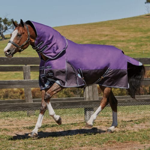 WEATHERBEETA COMFITEC PLUS DYNAMIC DETACH-A-NECK MEDIUM TURNOUT RUG WeatherBeeta ComFiTec plus dynamic turnout rug WeatherBeeta ComFiTec rug WeatherBeeta medium turnout rug WeatherBeeta turnout rug turnout rug detach a neck rug detach a neck turnout rug WeatherBeeta horse rug WeatherBeeta detach a neck turnout rug WeatherBeeta ComFiTec plus dynamic turnout rug Orican original