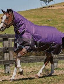 The WeatherBeeta ComFiTec Plus Dynamic Combo Neck Medium Lite Turnout Rug is comfortable durable and remarkable value with a 1200 denier triple weave outer shell and waterproof and breathable repel shell coating